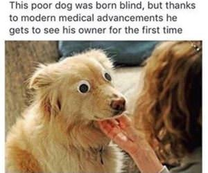 dog was born blind funny picture