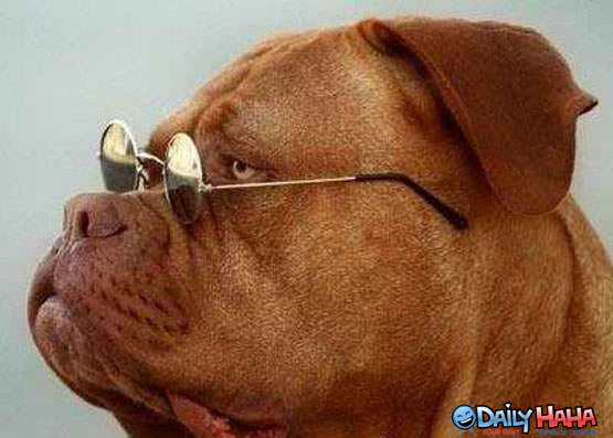 Dog with Prescription