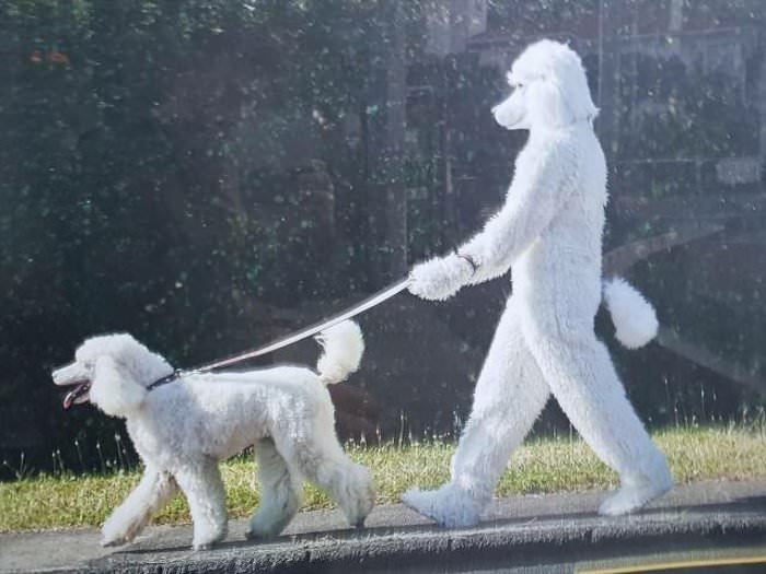 doggo the doggo walker