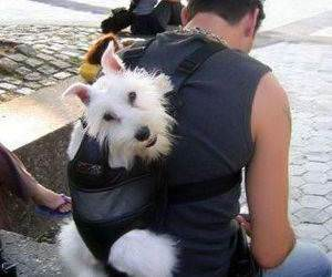 Real Doggie Bag