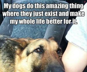dogs are amazing