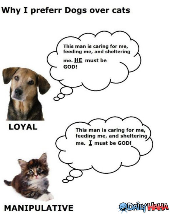 Dogs VS Cats funny picture
