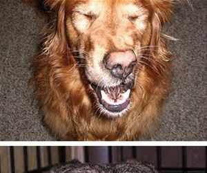 dogs about to sneeze funny picture