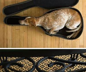 dogs can fall asleep anywhere funny picture