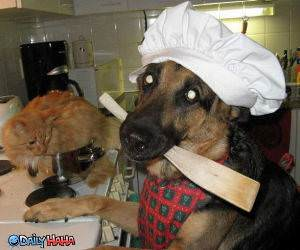 Dogs Favorite Dish Funny Picture