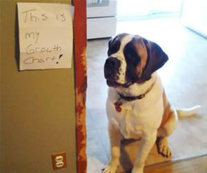 dogs growth chart funny picture
