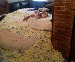 dogs made a little mess funny picture