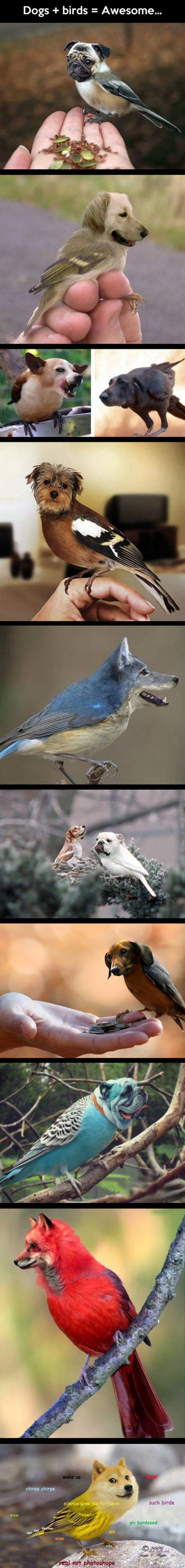 dogs plus birds funny picture
