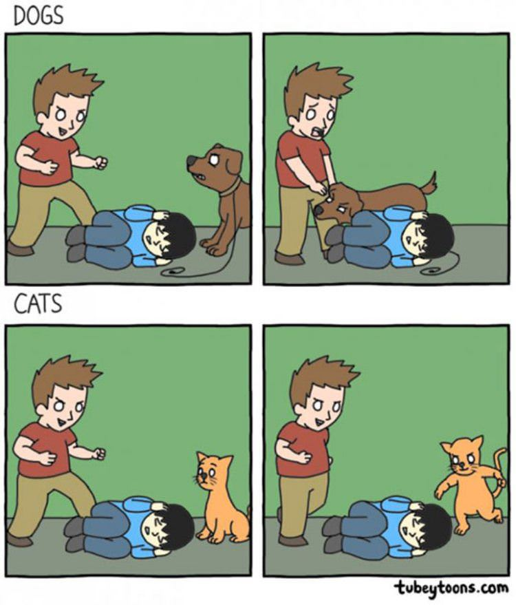 dogs_vs_cats.jpg