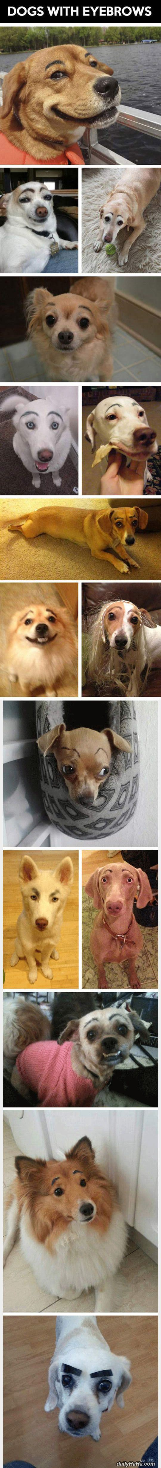 dogs with eyebrows funny picture
