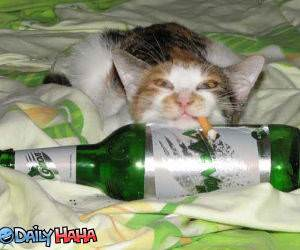 Drinking and Smoking Cat