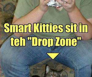 Drop Zone funny picture