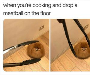 dropped a meatball