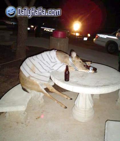 Image result for Drunk deer