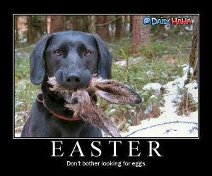Easter Egg Killer