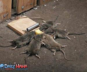 Effective Mouse Trap