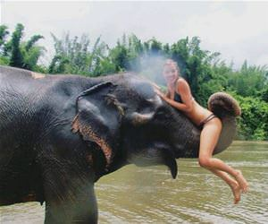 elephant rides funny picture