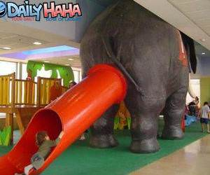 Elephant Slide