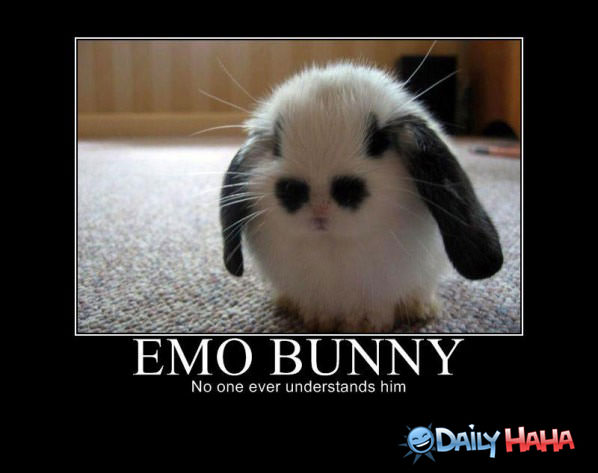 Emo Bunny funny picture
