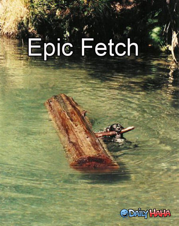Epic Fetch funny picture