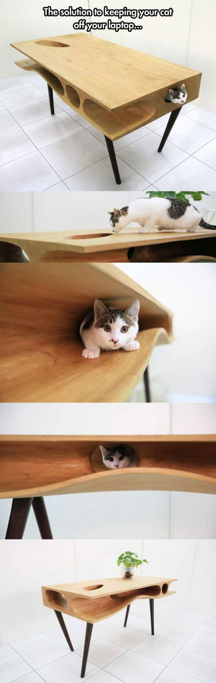 epic cat table funny picture