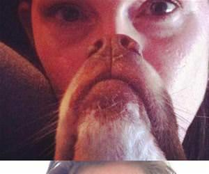 epic dog beards funny picture