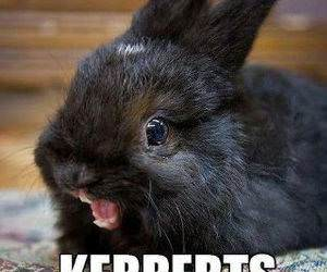 Ermagerd Bunny funny picture