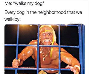 every other dog