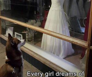 every girl dreams of her big day funny picture