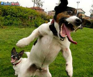 Excitable Dogs
