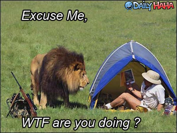 Excuse Me Lion funny picture