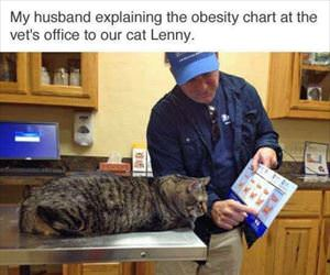 explaining the obesity chart to the cat