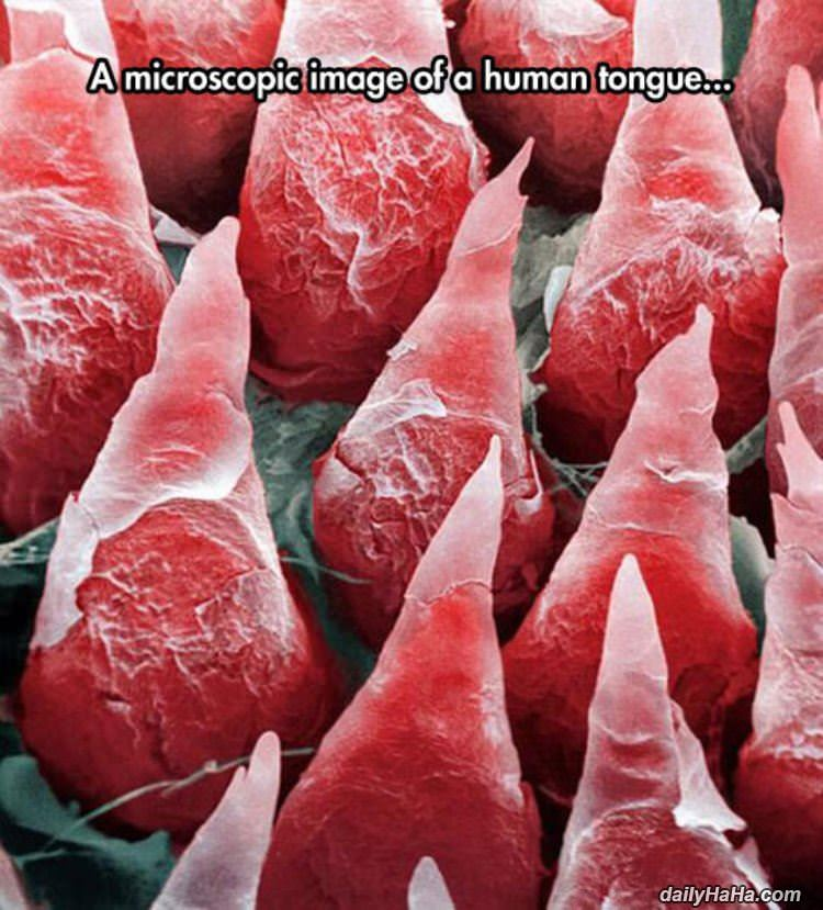 extreme closeup human tongue funny picture