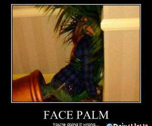 Face Palm funny picture