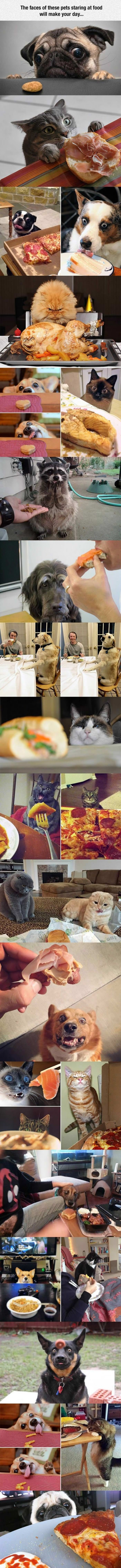 faces of pets looking at food funny picture