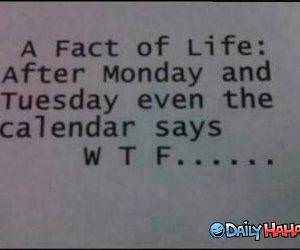 Fact of Life funny picture