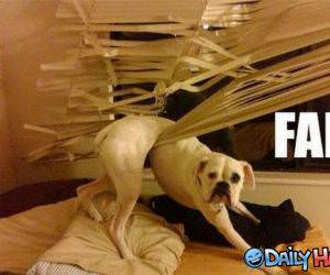 Failure Dog funny picture