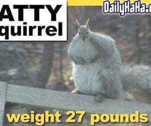 Fatty Squirrel
