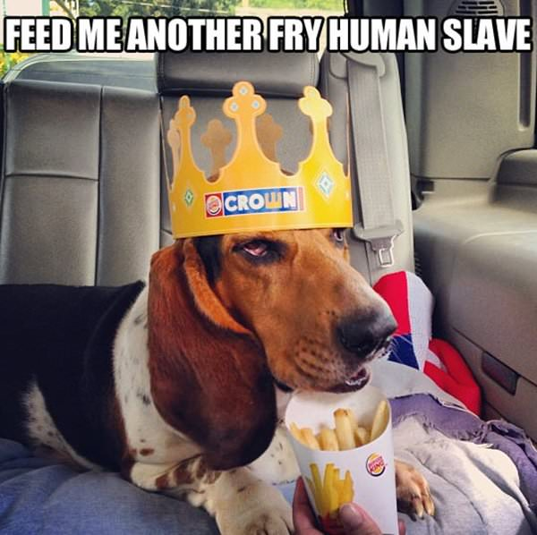 Feed Me Another Human funny picture
