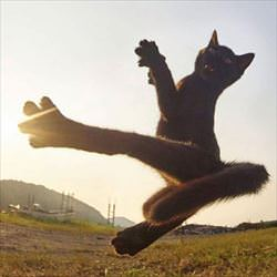 flying ninja cat ... 2