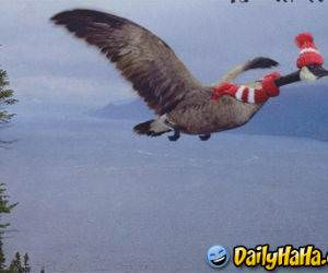 This goose knows how to fly in style!