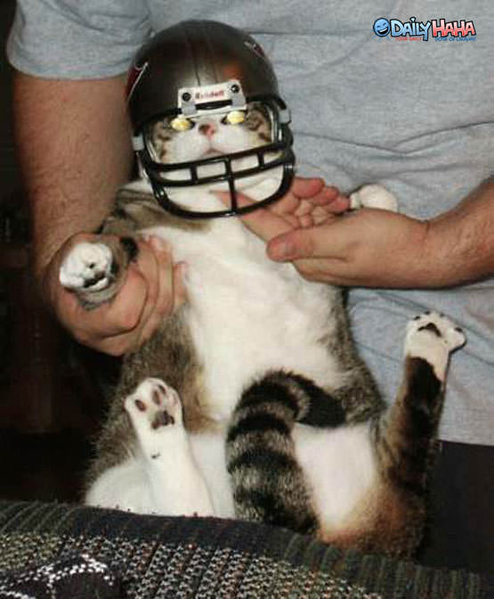 Football Helmet Cat