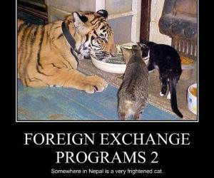 Foreign Exchange Programs funny picture