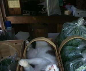 found the fresh catnip