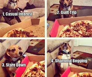 four stages of pizza bargaining funny picture