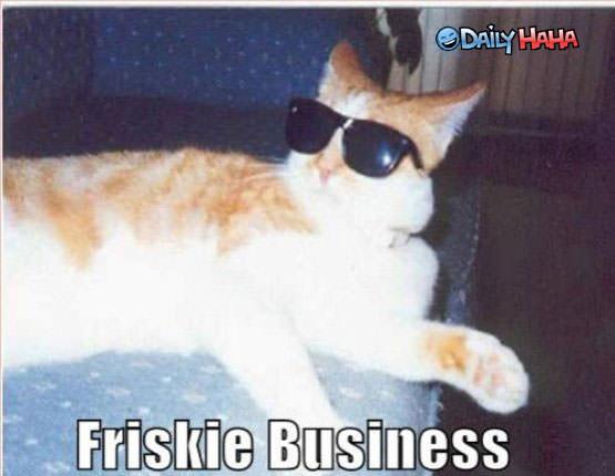 Frisky Business Cat