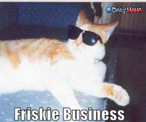 Frisky Business Cat