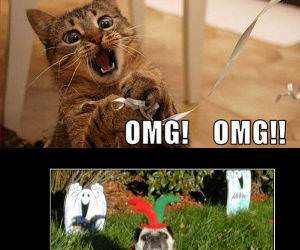 Funny LOLCats funny picture