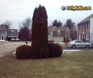 Funny Bush