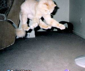 Fuzzy Cat Jump Attack`